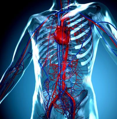 vascular-system-glow